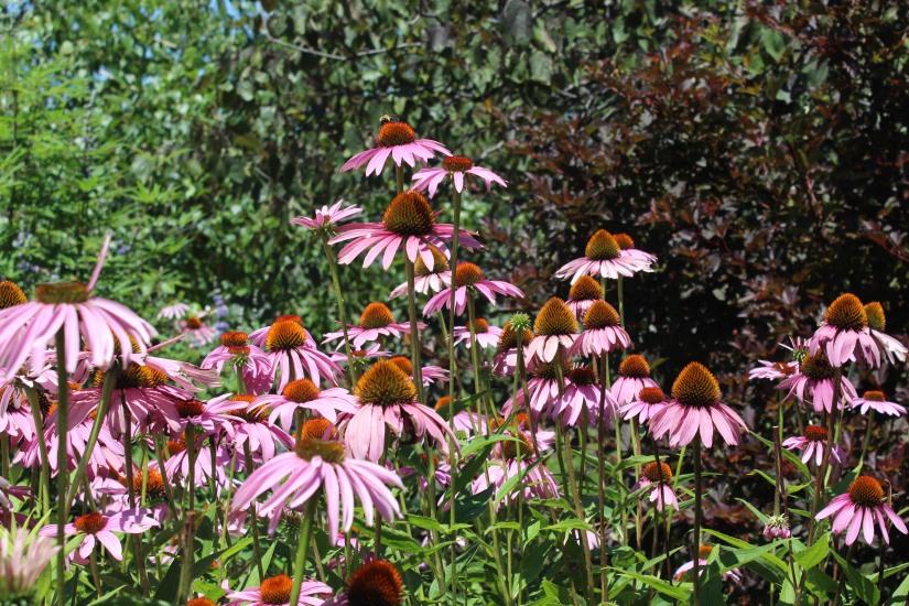 Garden Update: Week of July 8,2017