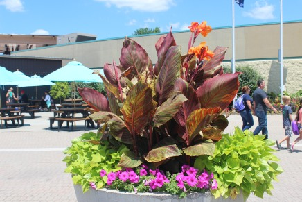 Planter outside the Zoo. Love the colorful leaves!